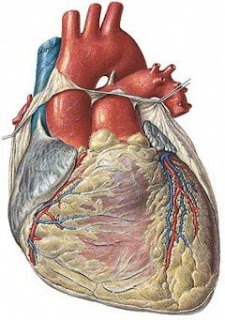 La rehabilitación cardíaca y sus beneficios