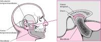 Articulacion de la mandibular 2