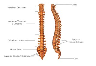 Hernias discales, qué son y cómo se tratan